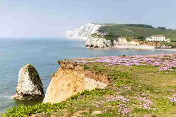 Stand up paddle boarders shot from the cliffs above Freshwater Bay on the Isle of Wight with wild flowers in bloom.