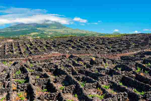 The vineyards on Pico island. (Photo by Martin Zwick/REDA&CO/Universal Images Group/Getty Images)