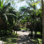 Some of the leafy, jungle-like grounds.