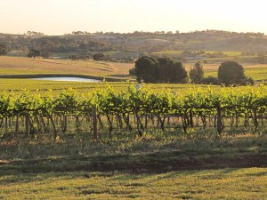 The Barossa Valley at golden hour