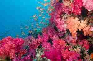 The aptly named Rainbow Reef in Fiji