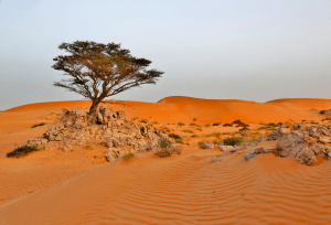 The sands of
