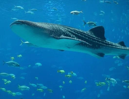 9 Ways To Do Riviera Maya from Cancun to Tulum