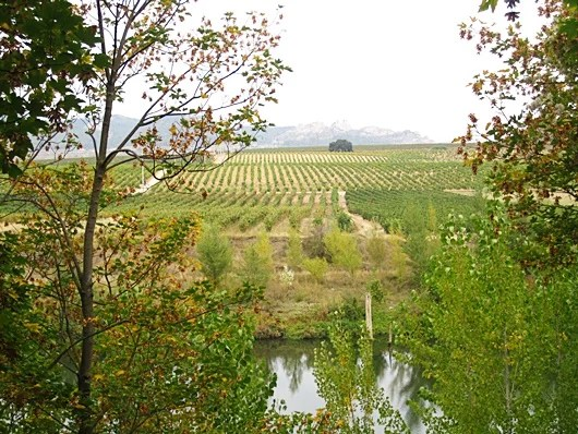 A Guide to Wine Tasting Through Spain's Rioja Region – The