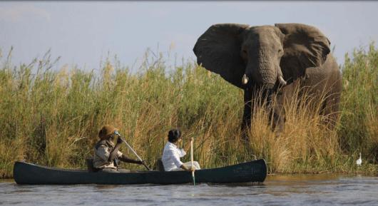 A canoe safari along the Lower Zambezi. Photo credit: Sausage Tree Camp.