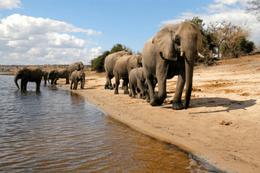 Head to the Chobe River region to see the enormous herds of elephants. Photo courtesy of Botswana Tourism.