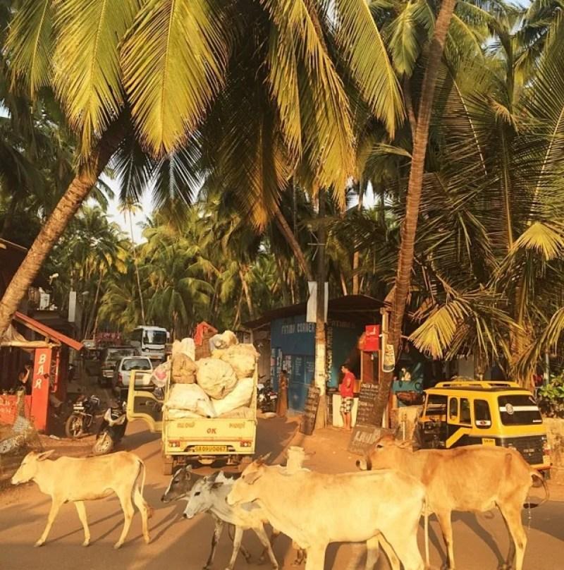Some typical roadblocks in India. Photo courtesy of Rachel Wasserman.