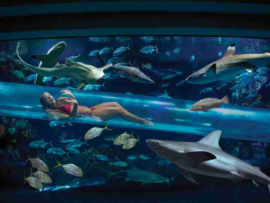 This could be you, sliding down the shark chute through the Tank.