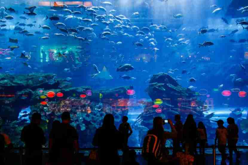 People look through the glass at the Dubai Aquarium & Underwater Zoo inside of the Mall of the Emirates on Monday, January 20, 2014 in , United Arab Emirates. © 2014 Patrick T. Fallon - All Rights Reserved, No Use Without Permission