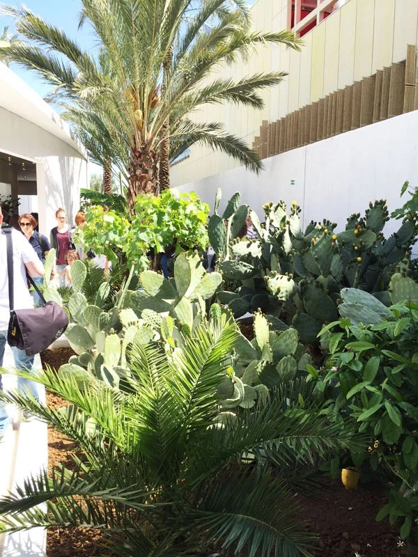 Cacti and palm trees at the Bahrain pavilion.