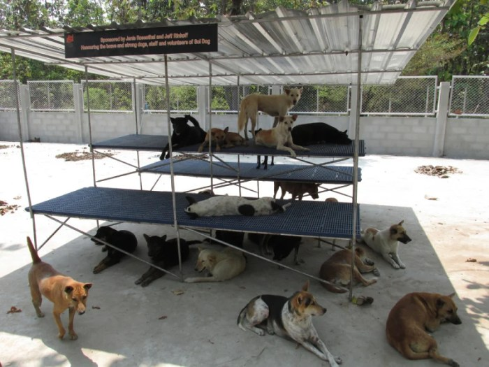 The After: Soi Dog has created severe rescues for the dogs to spread out. Photo by Soi Dog Foundation.