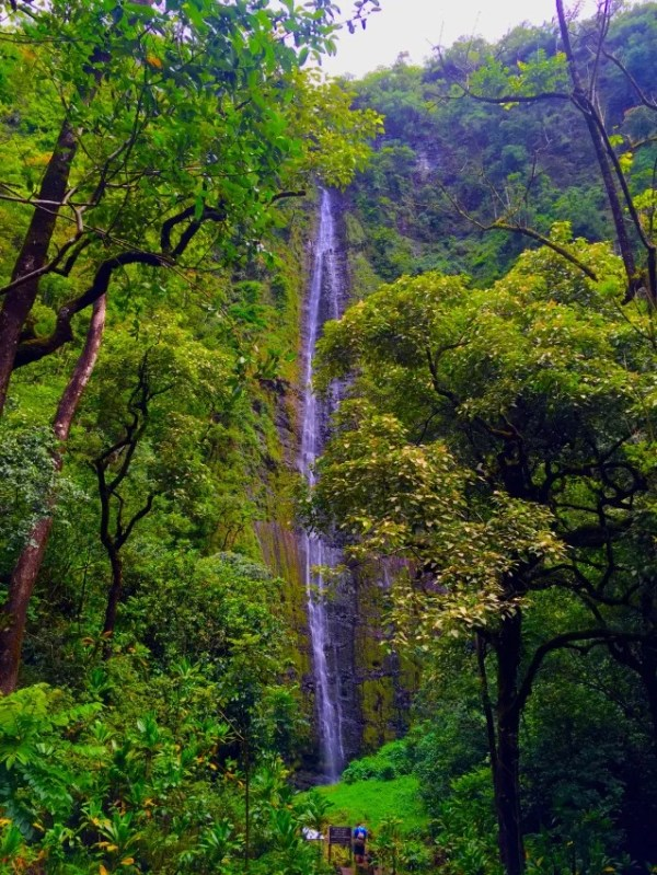 It's a four-mile hike through bamboo rainforests to the 400-foot Waimoku Falls.