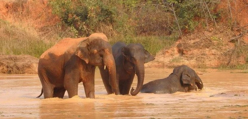 Responsible Ways To Meet Elephants in Southeast Asia