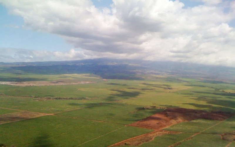 A smooth landing over the sugarcane fields of Maui. Photo by Melanie Wynne.