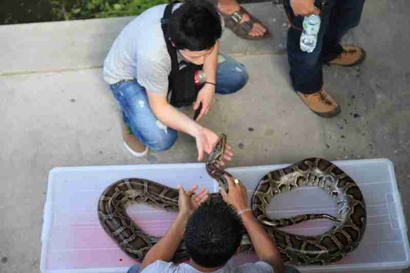 Bold tourists can to interact with market wildlife.