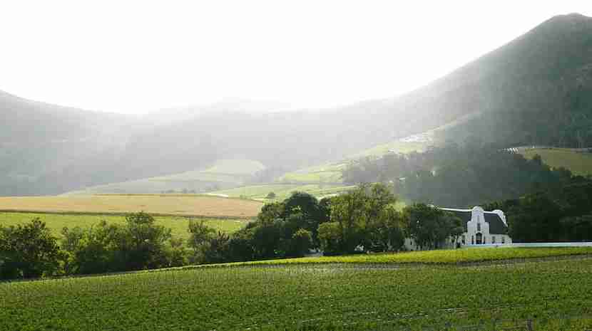 Explore one of the 18 wine routes in the Cape, including Constantia, where you