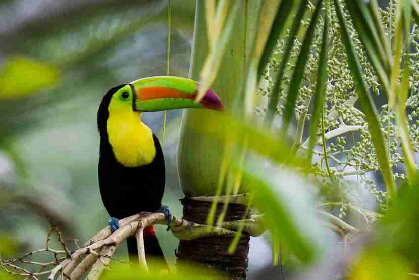 Belize is famous for its tropical forests. (Image Courtesy of Shutterstock)