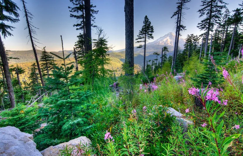 """Explore the trails of Mount Hood. Image courtesy of <a href=""""http://www.shutterstock.com/pic-84370963/stock-photo-majestic-view-of-mt-hood-on-a-bright-sunny-day-during-the-summer-months.html?src=K7aCeUvonokvuIgsQ7VlDQ-2-93"""">Shutterstock</a>."""