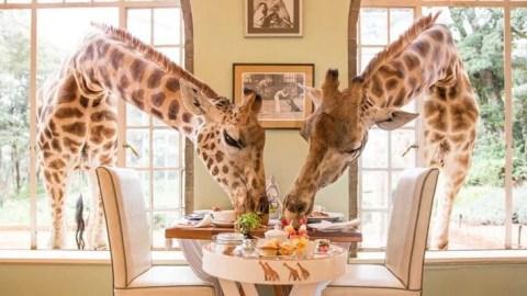 World's Most Unusual Hotels: Giraffe Manor in Nairobi, Kenya