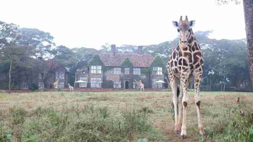 Come to Kenya! Hang out with locals! Image courtesy of Giraffe Manor.