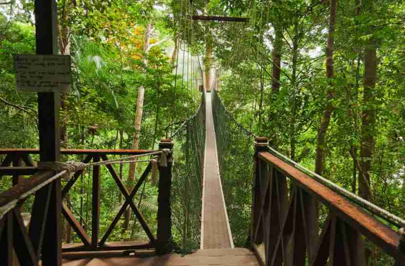 The canopy walk at the Taman Negara rainforest in Malaysia. Photo courtesy of Shutterstock.