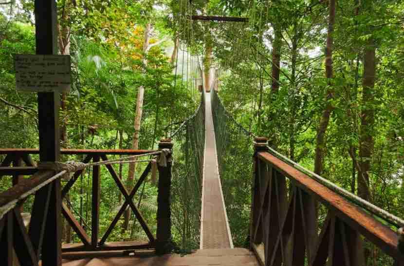 The canopy walk at the Taman Negara rainforest in Malaysia. Photo courtesy of Shutterstock.