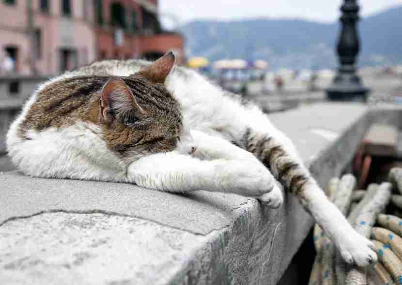 Cats rule Rome. Get used to it. Photo courtesy of Shutterstock.