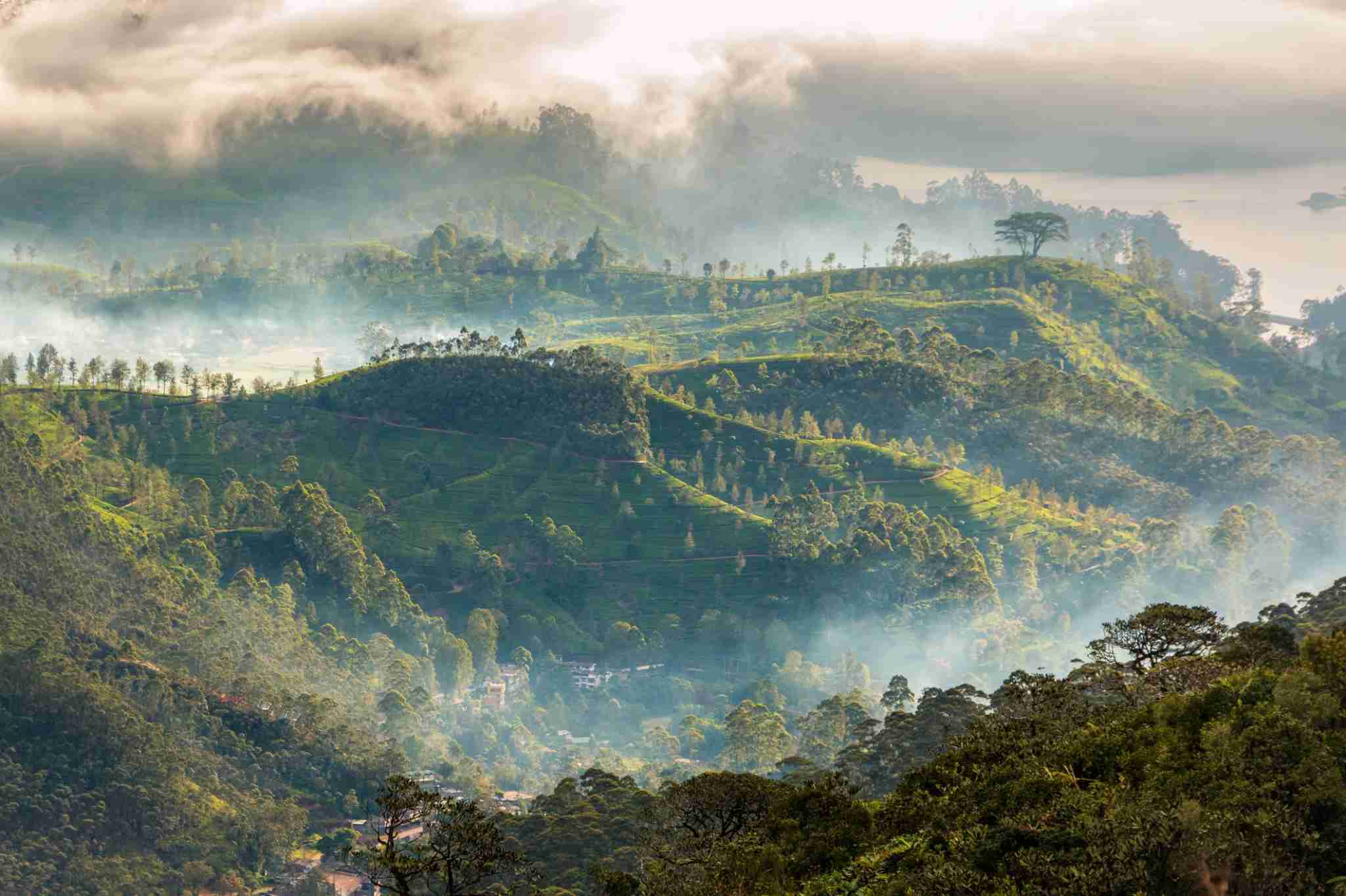 Morning mist over a Sri Lankan tea plantation. Image by Justin Schümann / Getty.