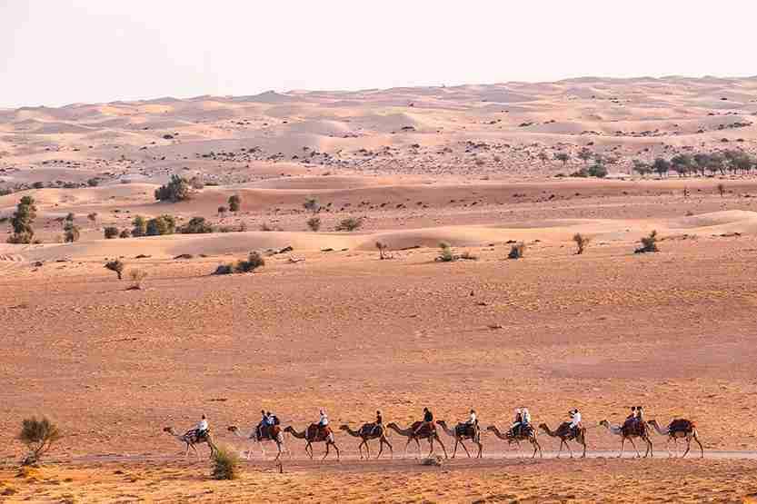 Dubai Camel Trek