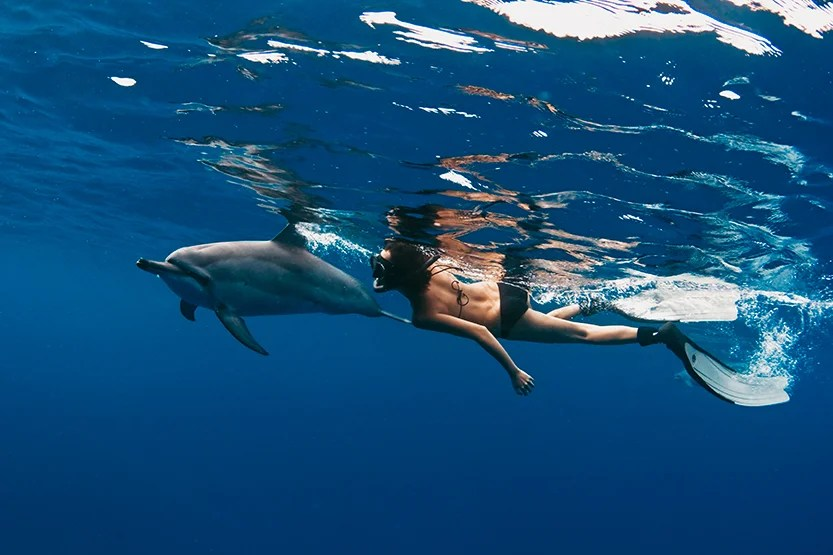 Swimming with dolphinsbopardau / Getty Images