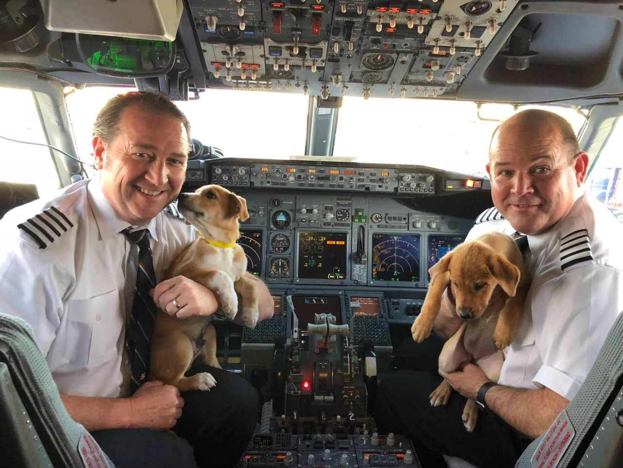 Southwest Flies 62 Puppies and Kittens Out of Puerto Rico
