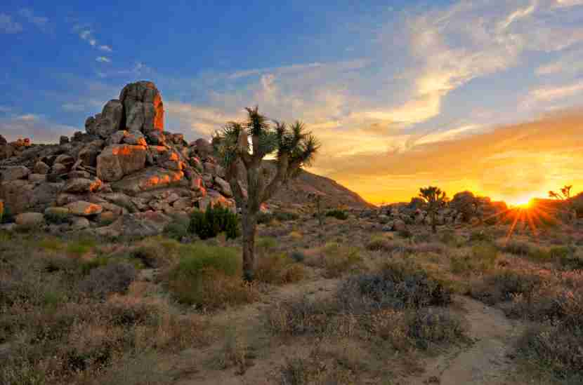 The Joshua Tree National Park is a desert landscape that has, not only the familiar Joshua trees, but many varieties of shrubs, plants, boulders and scrub land. Photo by Aubrey Stoll