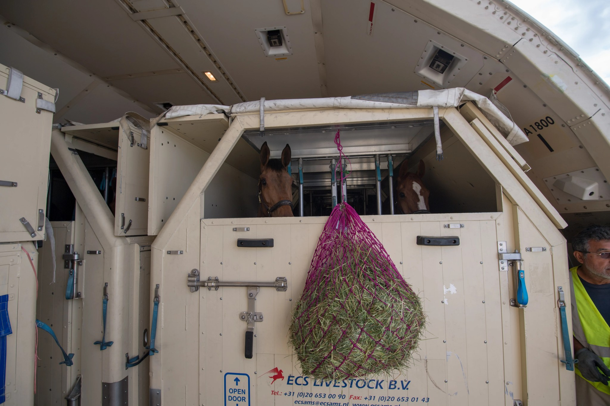 How Racehorses Fly To the Kentucky Derby