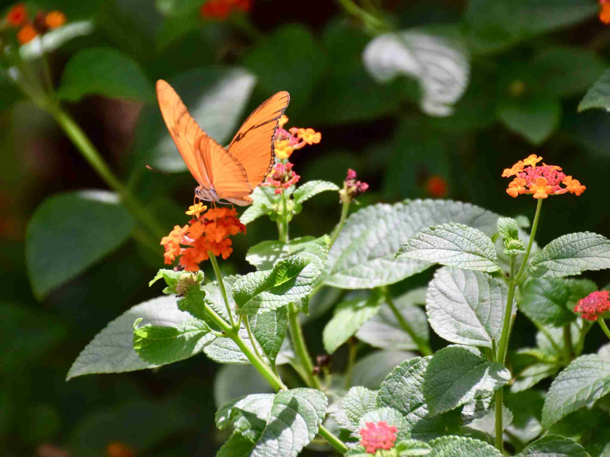Butterfly Farm Aruba