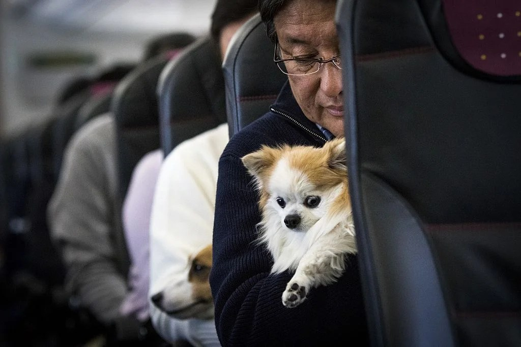Spirit Airlines Adds New Restrictions on Emotional Support Animals
