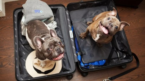 43e2a1ccf917 12 Amazing Travel Accessories for Globetrotting Pets