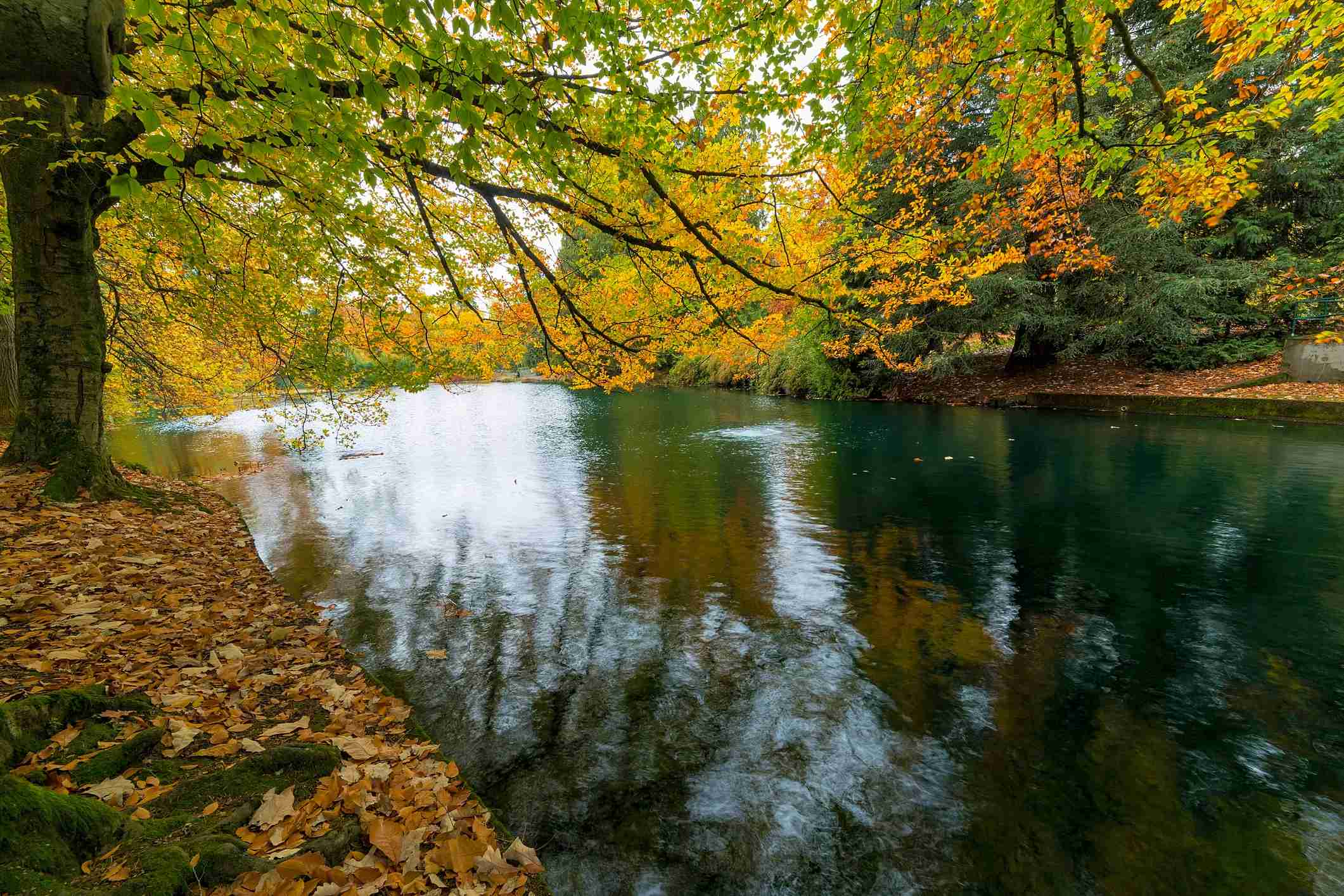 Fall foliage colors at Laurelhurst Park by the lake in Portland Oregon City in Autumn Season Image by Getty Images /