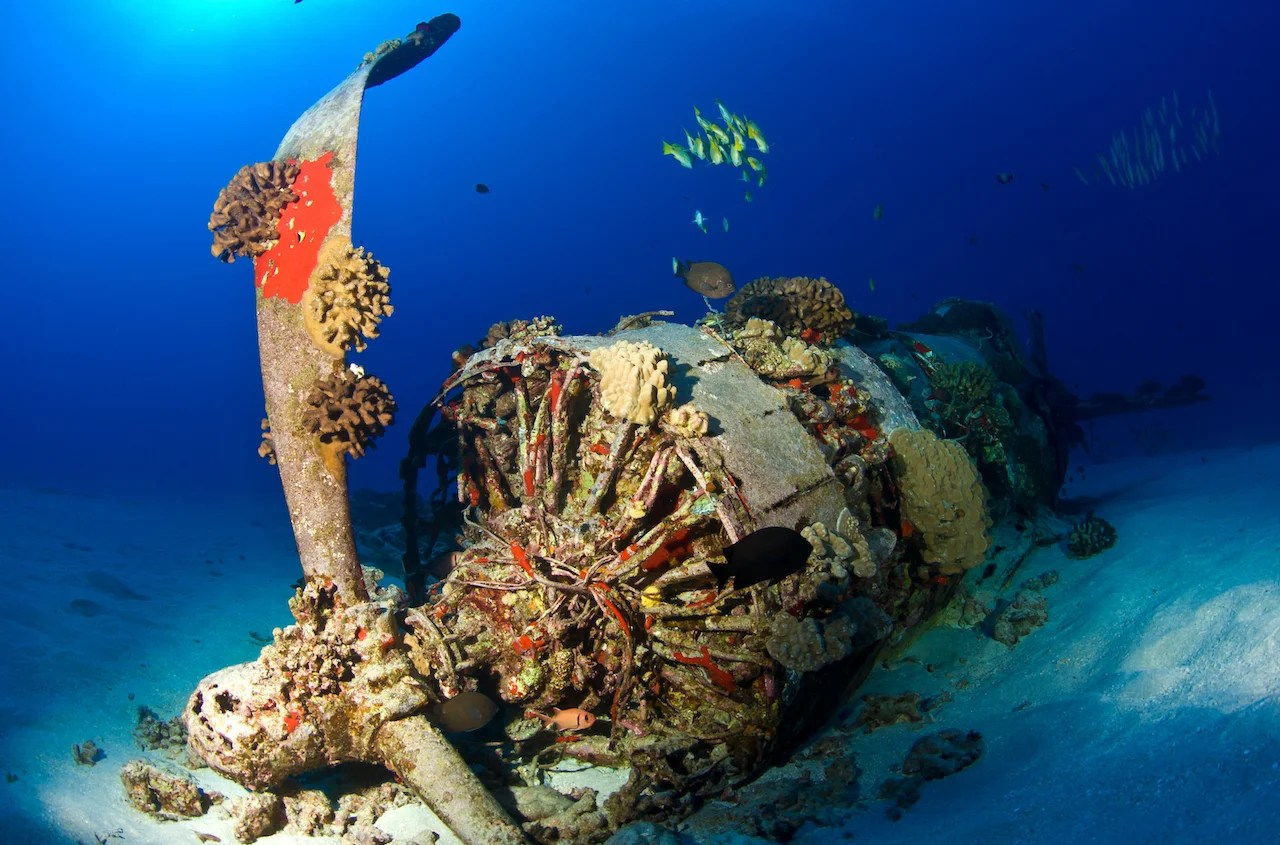 A wreckage of a WWII-era Corsair in the waters off Oahu, Hawaii. (Photo by Kevin Boutwell/Getty Images)