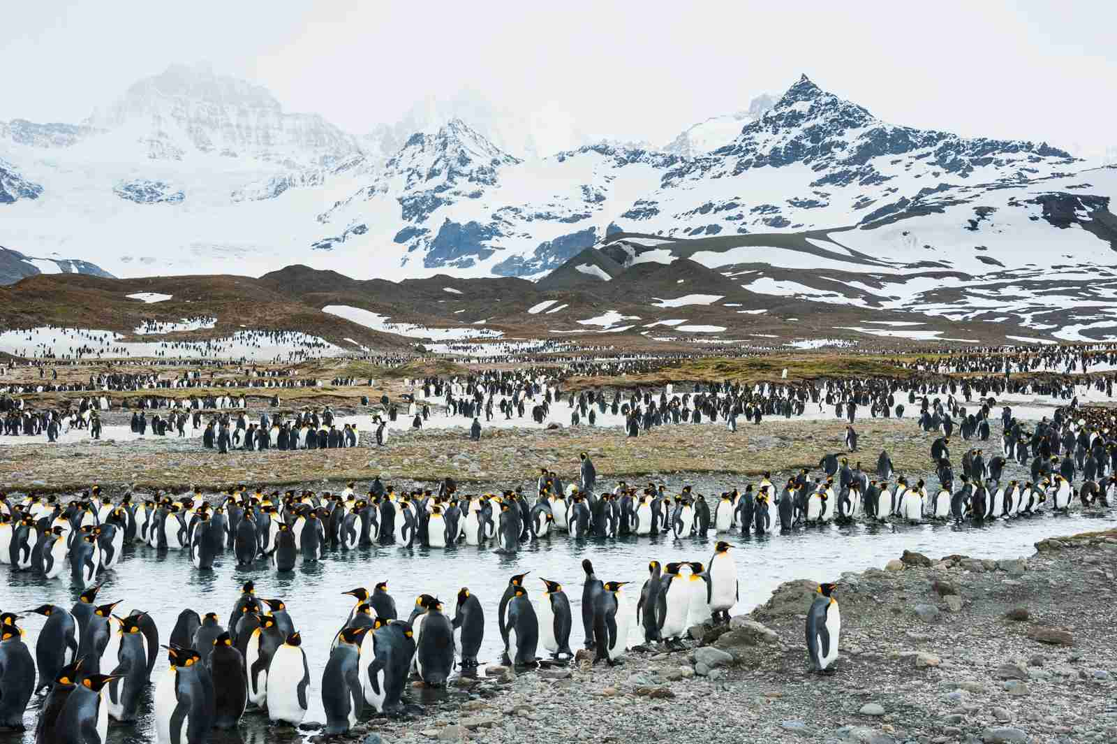 Have you ever been to see the penguins in Antarctica? (Photo via Shutterstock)