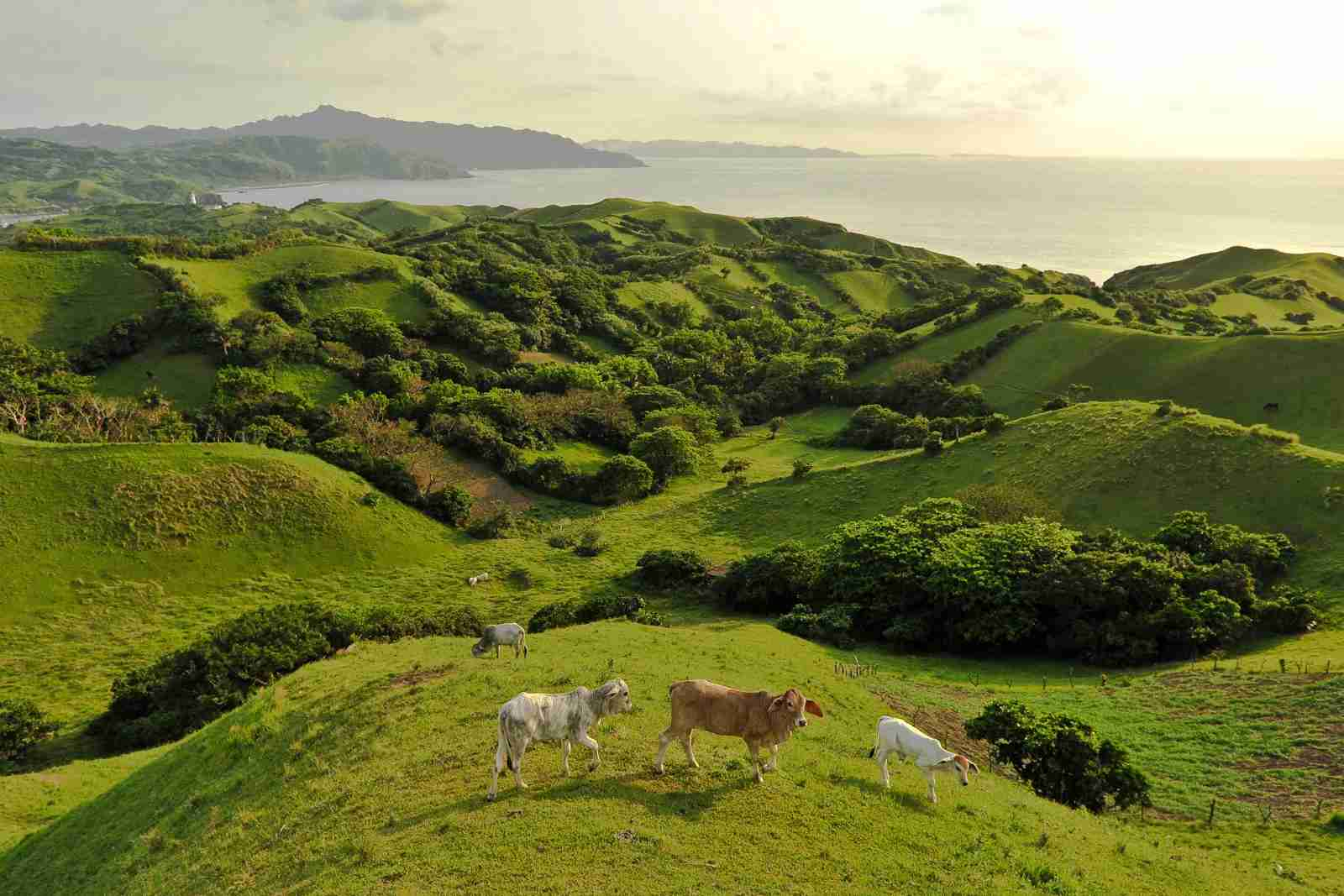 The rolling hills of Batanes. (Photo via Shutterstock)