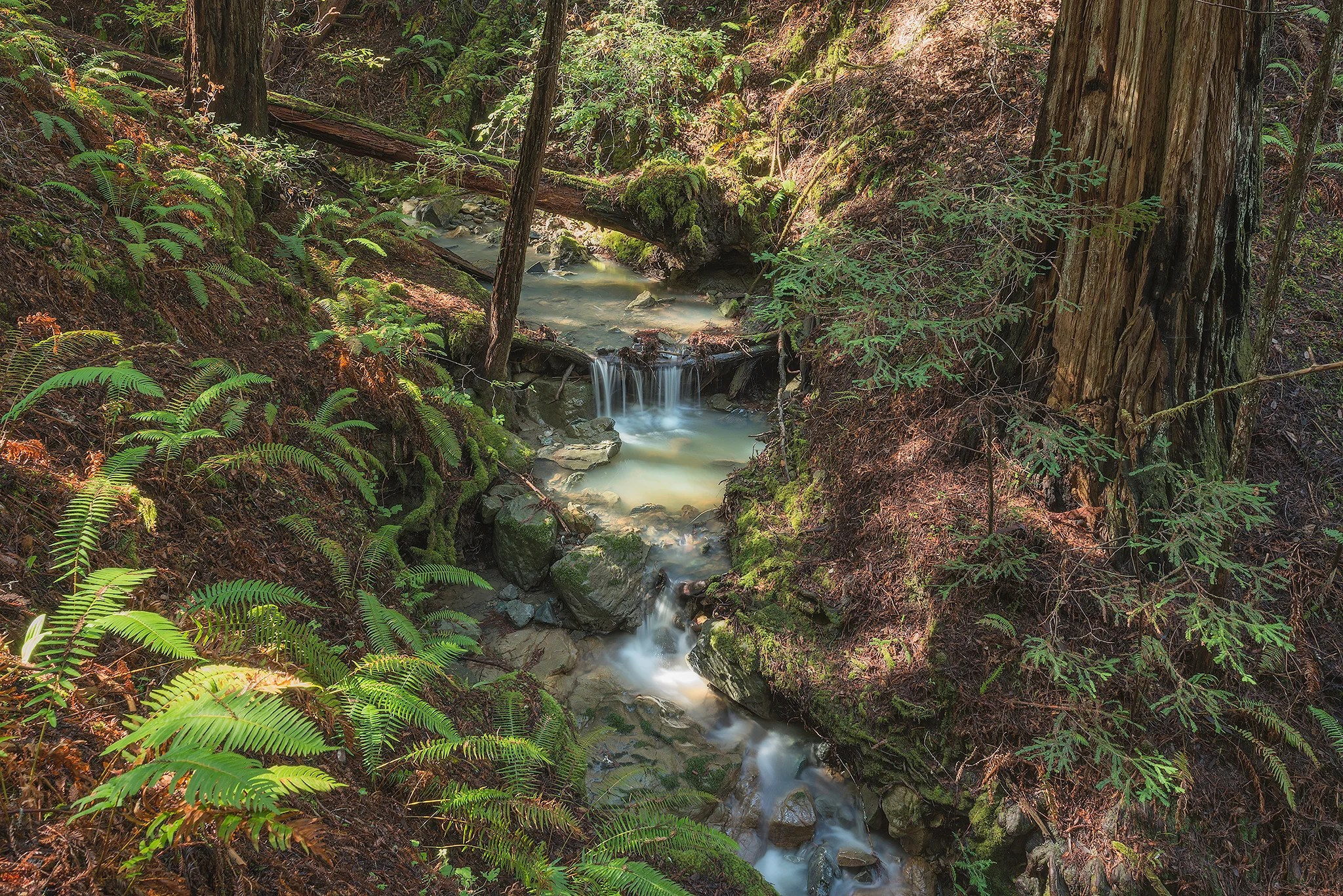 This Ancient Redwood Forest Will Open to the Public for the First Time