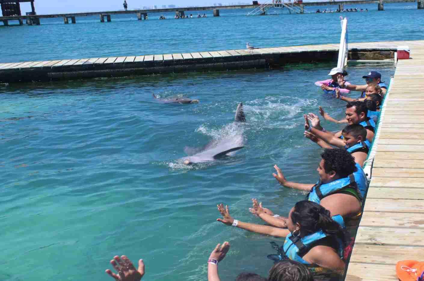 (Photo courtesy of Dolphin Discovery)