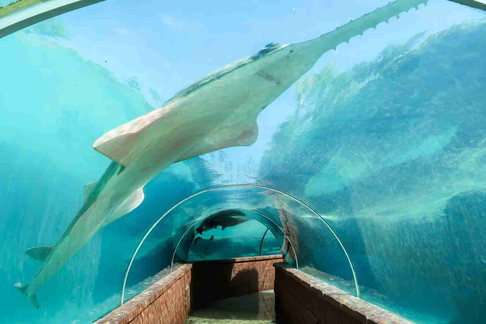 The underwater tunnel near the Lagoon Grill.