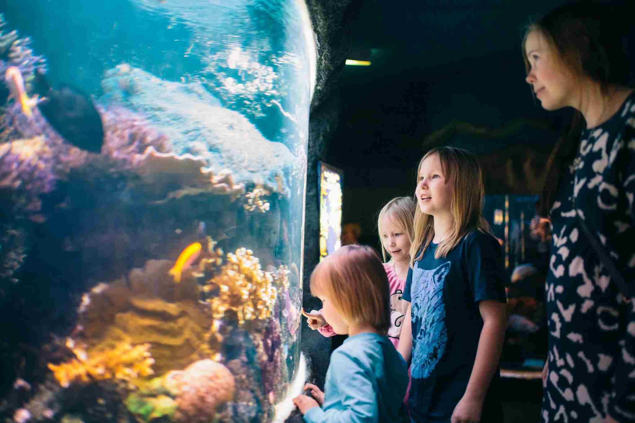 Kids love the Sea Life Aquarium in Helsinki, Finland. (Photo credit: