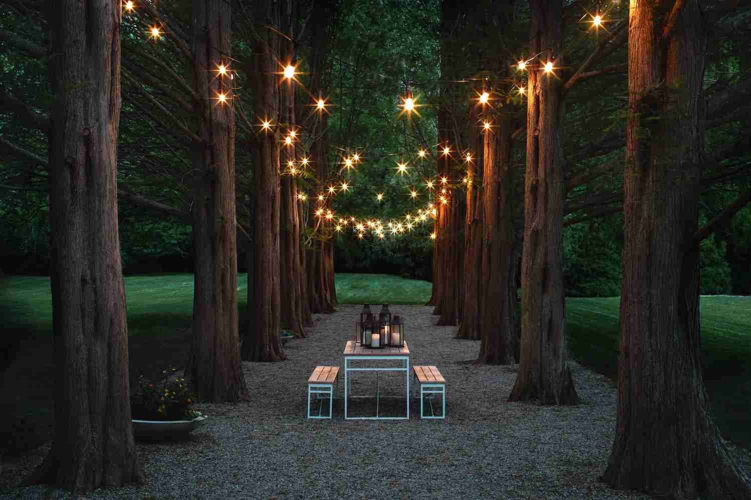 You could be hanging out in this magical redwood allée this summer. (Photo courtesy of A Room at the Beach.)