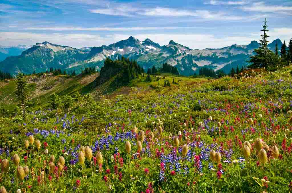 Wildflowers in meadow and view to Tatoosh Range from Skyline Trail in Paradise area; Mount Rainier National Park, Washington. (Photo by: Greg Vaughn /VW PICS/Universal Images Group via Getty Images)