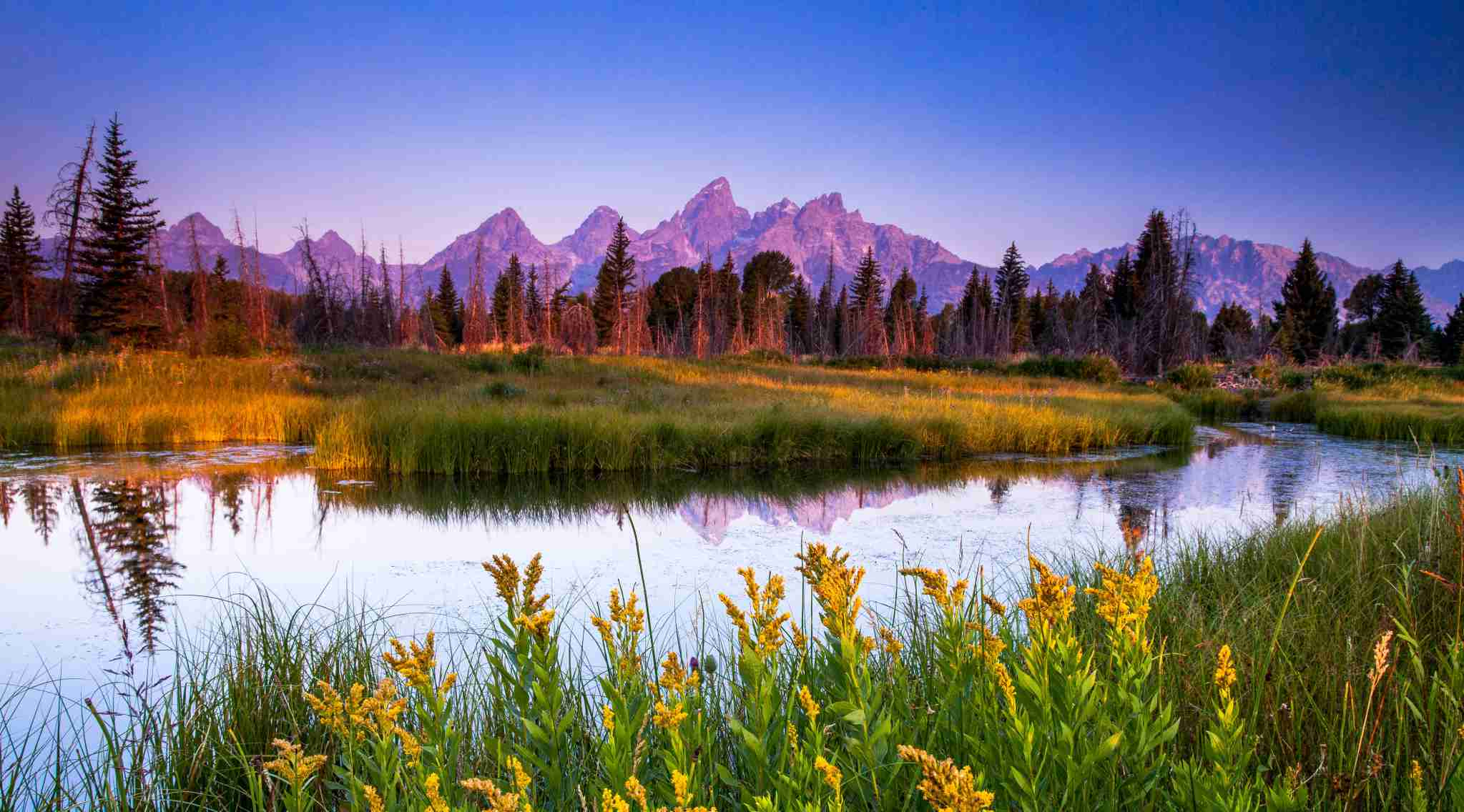 Taken down at Schwabacher Landing last week. Pretty nice sunrise and had the place to myself. I waded over through some marsh to capture these wildflowers as well as catch the reflection of the top of the Grand and Teewinot in the Snake River pool. (Photo by Steve Burns/Getty Images)
