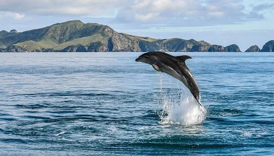 Tourists Can No Longer Swim With Dolphins in New Zealand