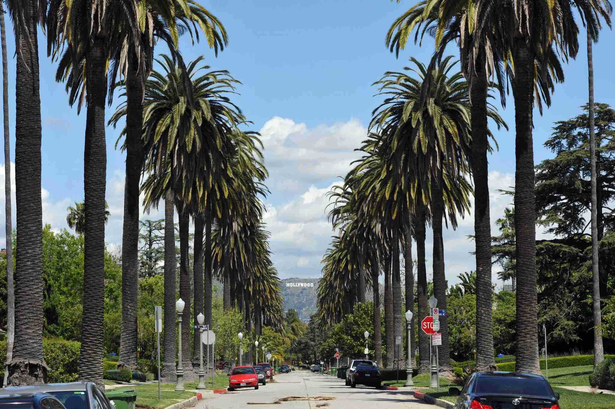 Windsor Boulevard lined with Palm trees looking towards the Hollywood sign. (Photo courtesy of