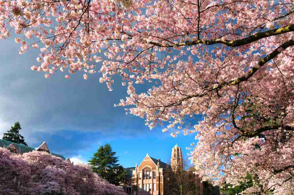 (University of Washington Quad in Seattle, Washington. Photo by Greg Vaughn /VW PICS/UIG via Getty Images)